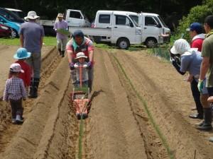 個人区画にそれぞれ好きな野菜苗を植えている写真