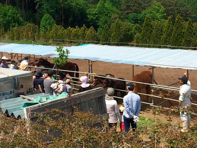 150510親子農業体験教室09