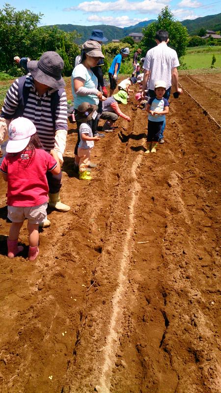 6月28日親子農業体験