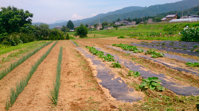 7月12日親子農業体験