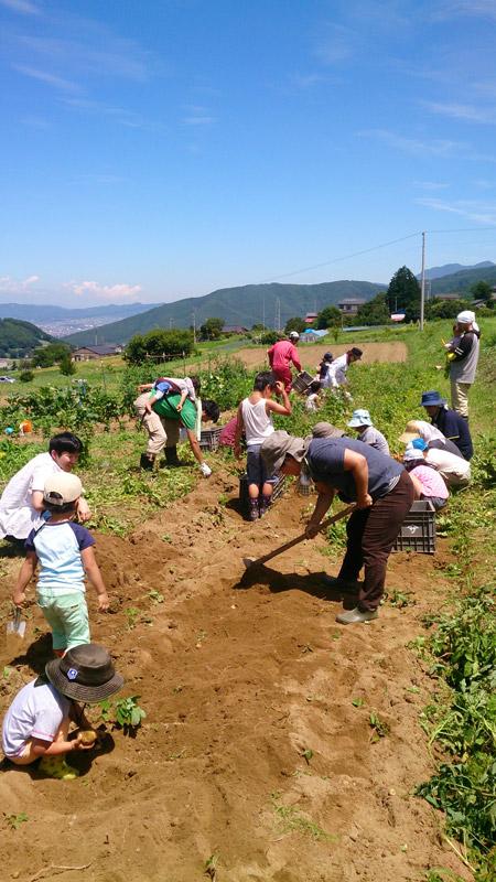 7月26日親子農業体験