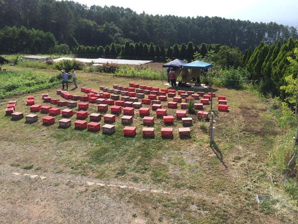 8月9日親子農業体験