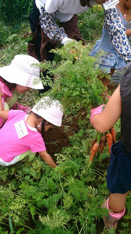 8月23日親子農業体験