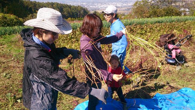 10月25日親子農業体験