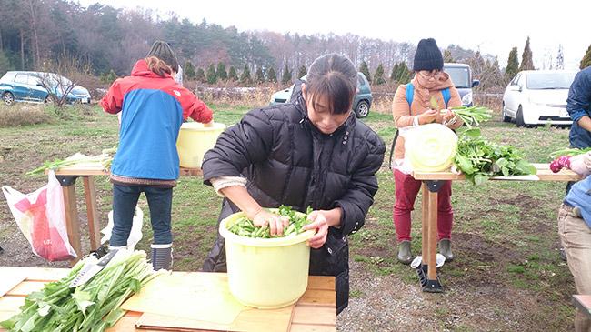 11月29日親子農業体験