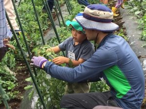 7月2日親子農業体験