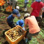 R02親子農業体験教室7月19日