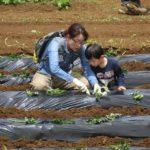 R02親子農業体験教室6月14日